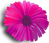 Getting iPad3, Original iPad gift for niece. Need Help theme!-pink-flower.png