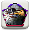 auros - enlight your phone-eaglew.png
