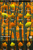[RELEASE] Autumn-img_0003.png